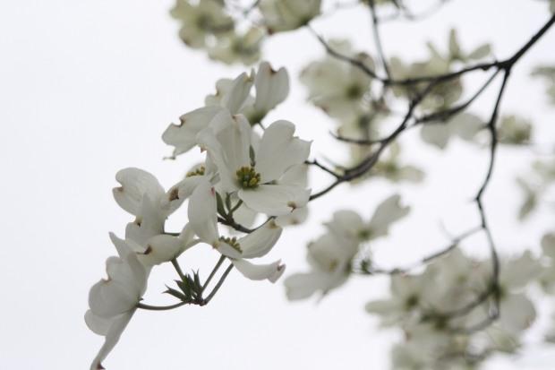 spring 1004