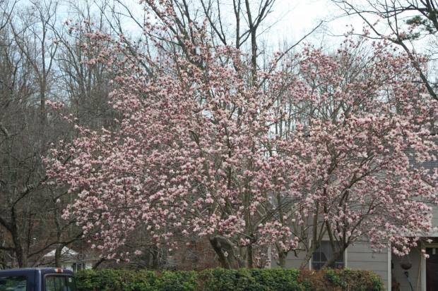 spring 1040