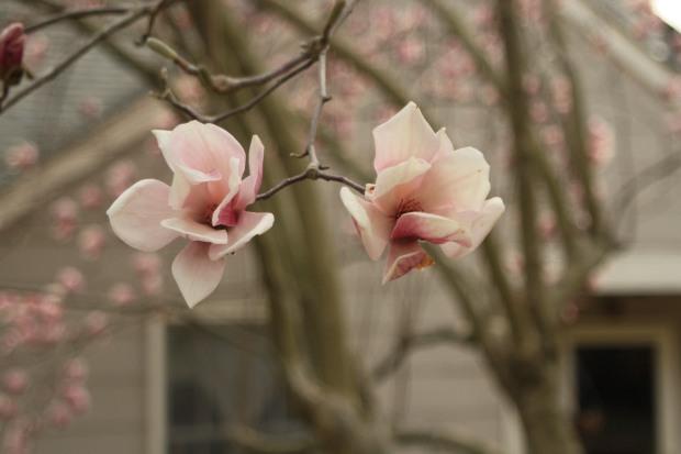 spring 1056
