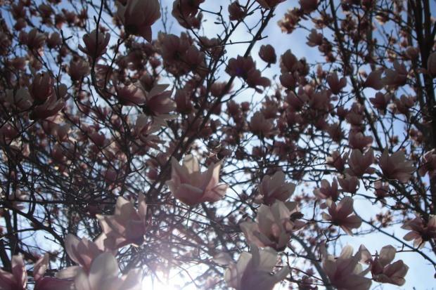 spring 1104