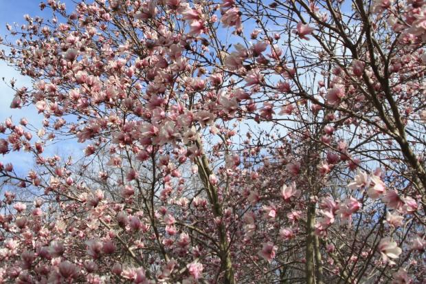 spring 1110