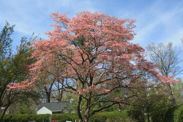 spring 1570