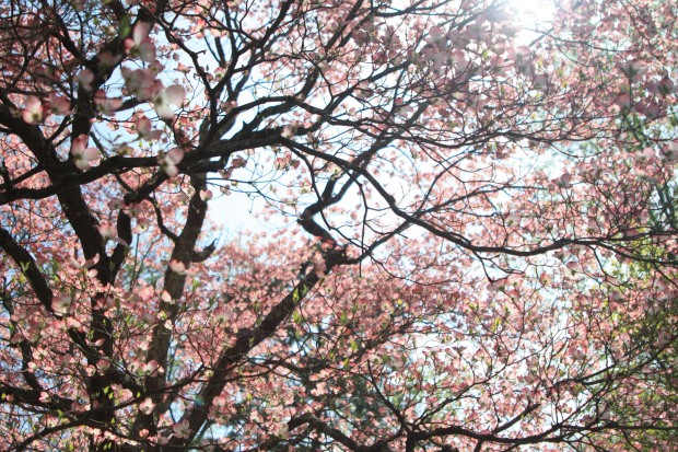 spring 1571