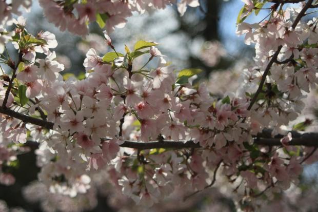 spring 742