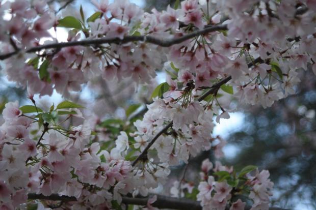 spring 748