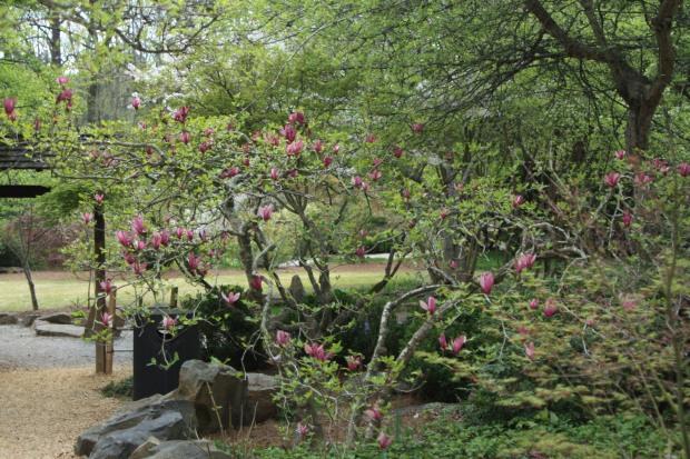 spring 751