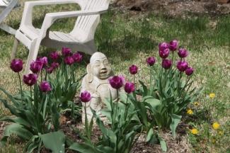 Buddha and tulips