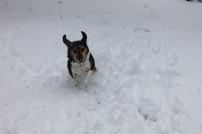 snowbeagle1
